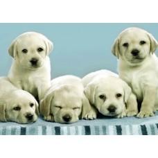 Poster - Cici Köpekler